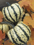 Winter Squash, Sweet Dumpling Variety Photographic Print by Wally Eberhart