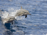 Two Spinner Dolphins (Stenella Longirostris) Leaping into the Air at the Same Time, Hawaii, USA Lmina fotogrfica por David Fleetham