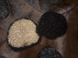 A Black Truffle (Tuber Melanosporum), Appalachian Mountains, North Carolina, USA Photographic Print by Rob & Ann Simpson