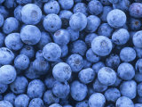 Blueberries, Vaccinium Corymbosum Photographic Print by David Sieren
