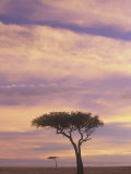 Acacia Trees Silhouetted at Twilight on the Savanna, Masai Mara Game Refuge, Kenya, Africa Photographic Print by Adam Jones