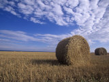 Rolled Hay Bales under a Blue Sky Photographic Print by Tim Hauf