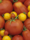 Variety of Tomatoes Photographic Print by Wally Eberhart