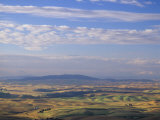 Rolling Hills of Palouse Farm Country, Eastern Washington, USA Photographic Print by Adam Jones