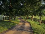 Tree-Lined Winding Road and Fences at First Light Between Pastures, Kentucky, USA Photographic Print by Adam Jones