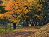 Walking Trail around Bass Lake in the Autumn, Blowing Rock, North Carolina, USA Photographic Print by Adam Jones