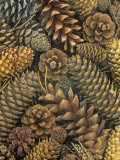 Conifer Cones Photographic Print by Wally Eberhart