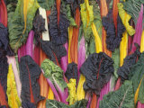 Rainbow or Five-Colored Swiss Chard Photographic Print by David Cavagnaro