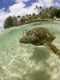 Green Turtle (Chelonia Mydas), Oahu, Pacific Ocean, Hawaii, USA Photographic Print by Reinhard Dirscherl