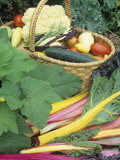 Vegetable Harvest Photographic Print by David Cavagnaro