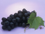 Black Seedless Grapes, Black Beauty Variety (Vitis) Lámina fotográfica por Wally Eberhart