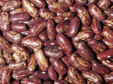 Spanish Tolosana Beans (Phaseolus Vulgaris). Native to Central and South America Photographic Print by Ken Lucas