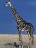 Masai Giraffe Photographic Print by Leonard Lee Rue