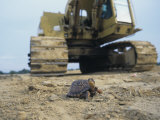 Habitat Destruction of the Eastern Box Turtle, , Terrapene Carolina Photographic Print by Jim Merli