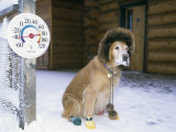 Dog Sitting on Snow, 45 Degrees Below Zero Fahrenheit Photographic Print by Hugh Rose