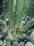 Tourmaline Elbaite Crystals on Quartz Photographic Print by Ken Lucas