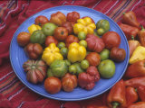 Variation in Tomatoes, Mixture of Rainbow Heirloom Varieties Lámina fotográfica por David Cavagnaro