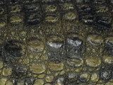 Close-Up of Scales on a Nile Crocodile, Crocodylus Niloticus, East Africa Photographic Print by Fritz Polking