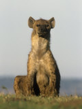 Spotted Hyena, Crocuta Crocuta, Masai Mara, Kenya Photographic Print by Joe McDonald