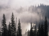 Mountain Mist and Fog in the Coniferous Forest of Mt. Rainier National Park, Washington, USA Photographic Print by Adam Jones