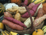 Sweet Potato Harvest Photographic Print by David Cavagnaro