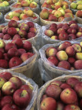 Macintosh Apples for Sale at Roadside Stand Photographic Print by Adam Jones