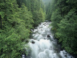 Ohanapecosh River, Mt. Rainier National Park, Washington, USA Photographic Print by Adam Jones