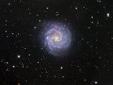 Ngc 3184, Spiral Galaxy in Ursa Major Photographic Print by Robert Gendler