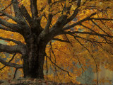 Autumn Foliage, North Carolina Photographic Print by Adam Jones