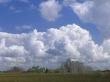 Hardwood Hammock of Dwarf Cypress Trees, Everglades National Park, Florida, USA Photographic Print by Adam Jones