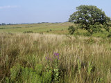 Sandhills and Tallgrass Prairies, Nachusa Grasslands, Illinois, USA Photographic Print by Greg Neise