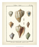 Volute Shells, Pl.384 Prints by Denis Diderot