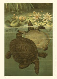 Pond Turtles Prints by Louis Prang