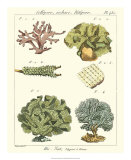 Coral Classification II Giclee Print