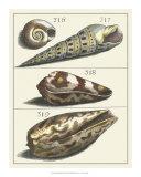 Seashell Menagerie V Giclee Print