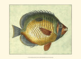 Butterfly Fish I Prints by Jennifer Goldberger
