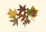 Tulip Tree, Gum and Scarlet Oak Print by  Denton