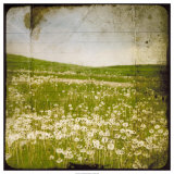 Field I Giclee Print by Ingrid Blixt