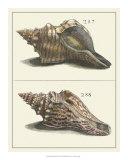 Seashell Menagerie II Giclee Print