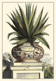 Antique Munting Aloe I Posters by Abraham Munting