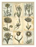 Botanical Patchwork II Giclee Print