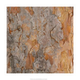 Nature's Textures VII Giclee Print