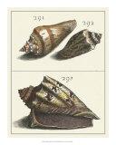 Seashell Menagerie VI Giclee Print