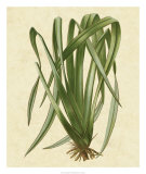 New Zealand Flax Poster