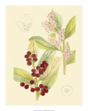Berries and Blossoms VI Giclee Print by Samuel Curtis