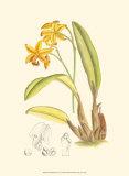 Orchid Plenty IV Kunst von Samuel Curtis
