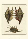 Crackled Antique Shells V Posters par Denis Diderot