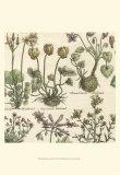 Delicate Garden I Print