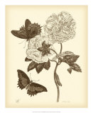 Nature Study in Sepia IV Print by Maria S. Merian
