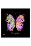 Striking Butterfly III Prints by Ginny Joyner